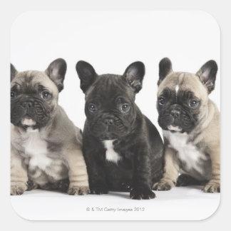 Three Pedigree Puppies Square Sticker