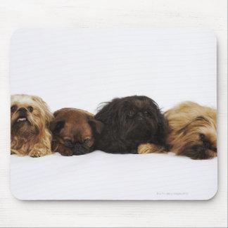 Three Pekingese dogs and single Pug lying down Mouse Pad