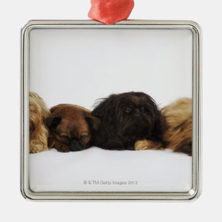 Three Pekingese dogs and single Pug lying down Silver-Colored Square Decoration