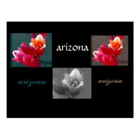 Three penstomen  flowers postcard