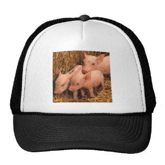 three piglets mesh hats