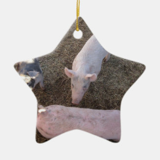 Three Pigs Double-Sided Star Ceramic Christmas Ornament