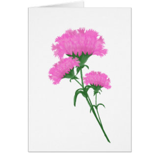 Three Pink Carnations Card