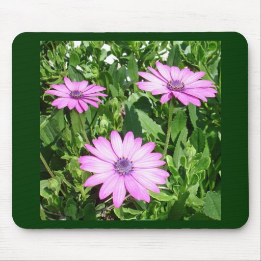 Three Pink Daisy Flowers Mousepads