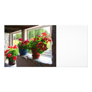 Three Pots of Geraniums on Windowsill Picture Card
