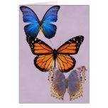 Three Pretty Butterflies