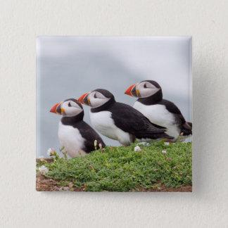 Three Puffins 15 Cm Square Badge