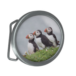 Three Puffins Buckle Oval Belt Buckle
