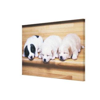 Three Puppies Canvas Print