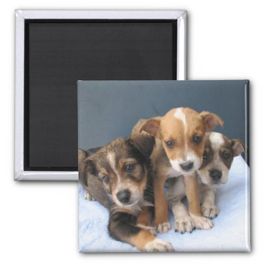 Three Pups Square Magnet