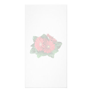 Three Red Gerbera Daisies Photo Cards