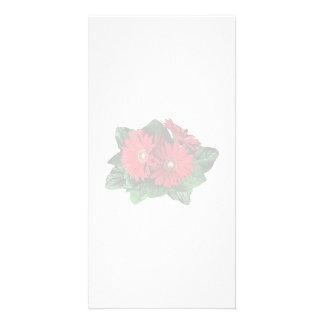 Three Red Gerbera Daisies Photo Cards