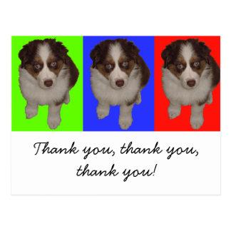 Three Red Tri Aussie Puppies Postcard