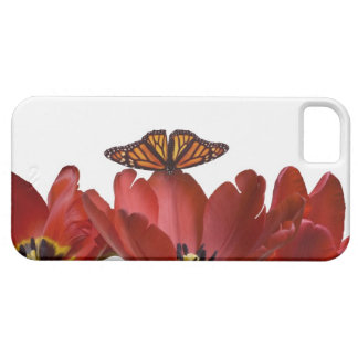 Three red tulips and a monarch butterfly against iPhone 5 cover