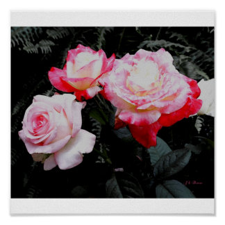 Three Roses Postage Poster