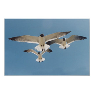 Three Seagulls Poster