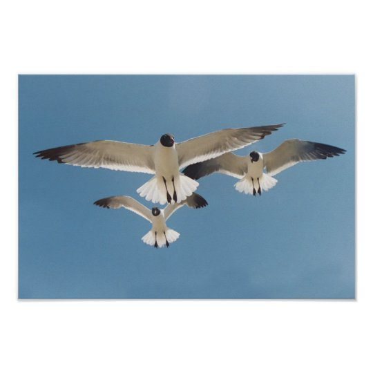 Three Seagulls Poster