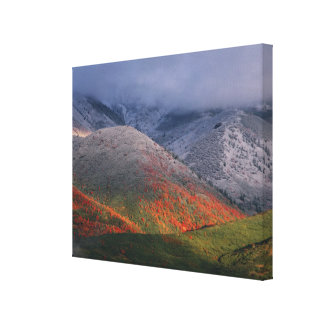 Three seasons of foliage, red maples and fall gallery wrap canvas