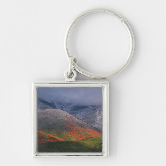 Three seasons of foliage, red maples and fall key ring