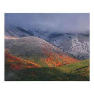 Three seasons of foliage, red maples and fall photo print