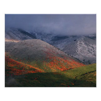 Three seasons of foliage, red maples and fall poster