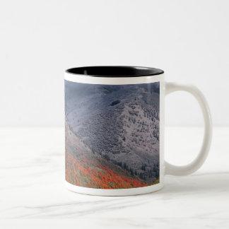 Three seasons of foliage, red maples and fall Two-Tone coffee mug