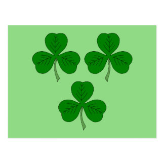 Three Shamrocks Postcard