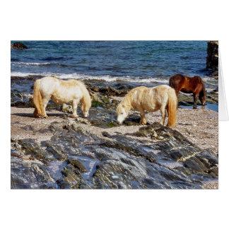 Three Shetland Ponies On Remote South Devon Beach Card