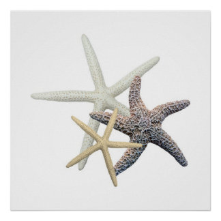 Three Starfish on White, Square Poster