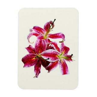 Three Stargazer Lilies Flexible Magnet