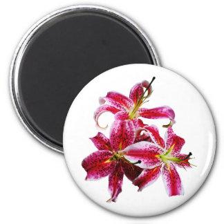 Three Stargazer Lilies Refrigerator Magnet