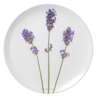 Three stems of English purple lavender flowers, Plate