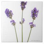 Three stems of English purple lavender flowers, Ceramic Tile