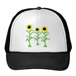 three sun flowers icon hats