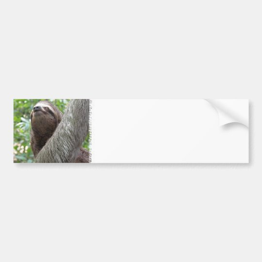 Three Toed Sloth Bumper Sticker