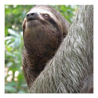 Three Toed Sloth Invitations