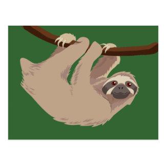 Three Toed Sloth Postcards