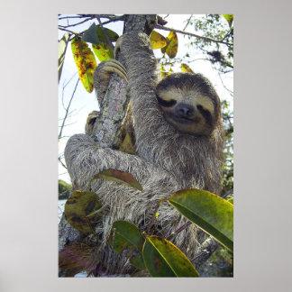 Three-Toed Sloth Poster