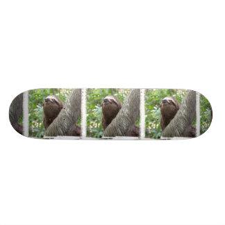 Three Toed  Sloth Skateboard