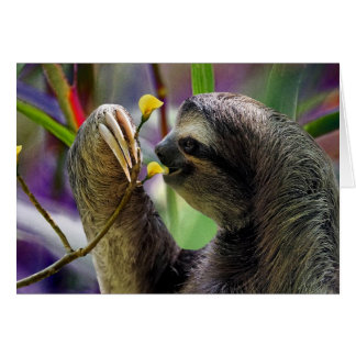 Three-Toed Tree Sloth Card
