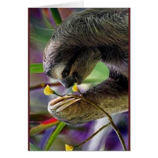 Three-Toed Tree Sloth Greeting Card