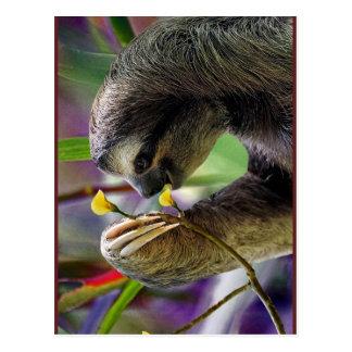 Three-Toed Tree Sloth Post Cards