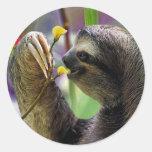 Three-Toed Tree Sloth Round Stickers