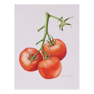 Three Tomatoes on the Vine 1997 Postcard