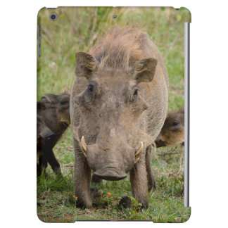 Three Warthog Piglets Suckle On Their Mother