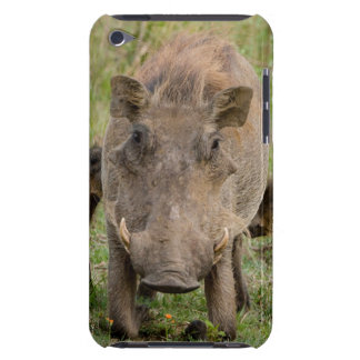 Three Warthog Piglets Suckle On Their Mother Barely There iPod Cover
