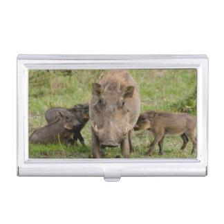 Three Warthog Piglets Suckle On Their Mother Business Card Holder