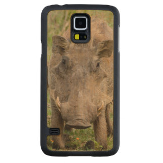 Three Warthog Piglets Suckle On Their Mother Carved Maple Galaxy S5 Case