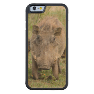 Three Warthog Piglets Suckle On Their Mother Carved Maple iPhone 6 Bumper Case