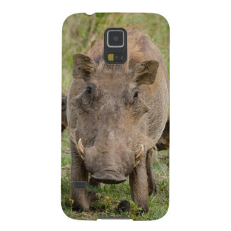 Three Warthog Piglets Suckle On Their Mother Galaxy S5 Cover